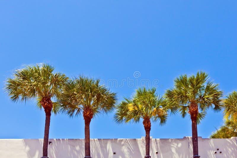 pięknych budynków historyczne palmy zdjęcie royalty free