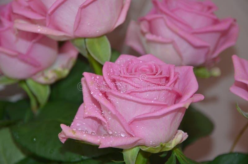 Pięknych i delikatnych kwiatów różowy colour obrazy stock