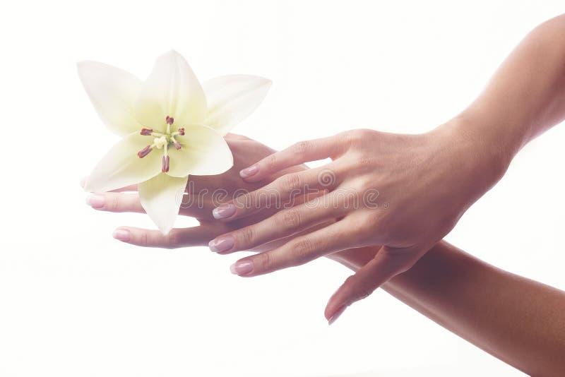 Pięknych kobiet ręk francuski manicure z rumianku kwiatem fotografia stock