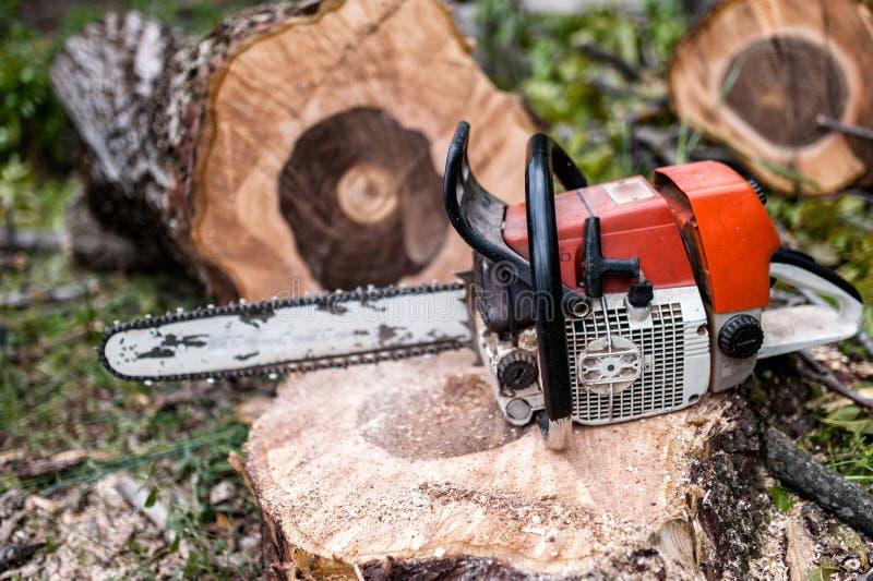 Piła łańcuchowa na stosie rżnięty drewno i szalunek, lumberjack zdjęcia royalty free