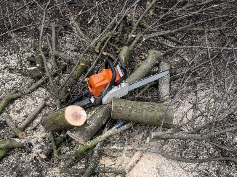 Piła łańcuchowa stojaki wśród nowych fiszorków cutted drewno Piła łańcuchowa, gałązki, trociny i kawałki drzewny bagażnik, - pięk zdjęcia stock