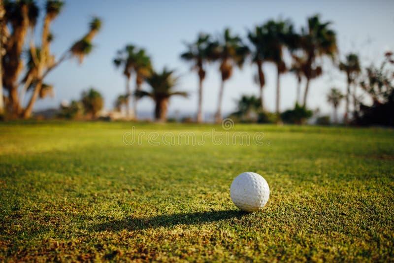 Piłka golfowa na zielonej trawie, drzewka palmowe na tle fotografia stock