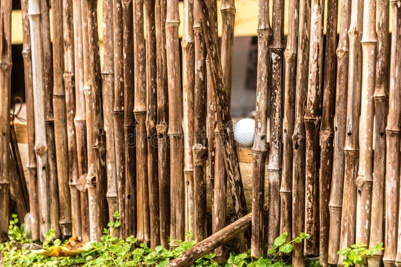 Piłka golfowa w bambusa ogrodzeniu obraz royalty free