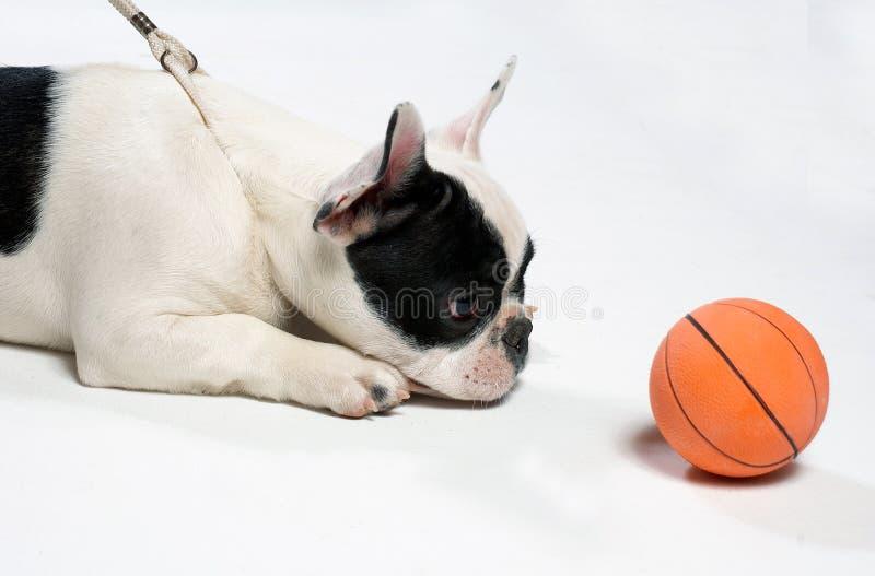 piłka pies obraz stock