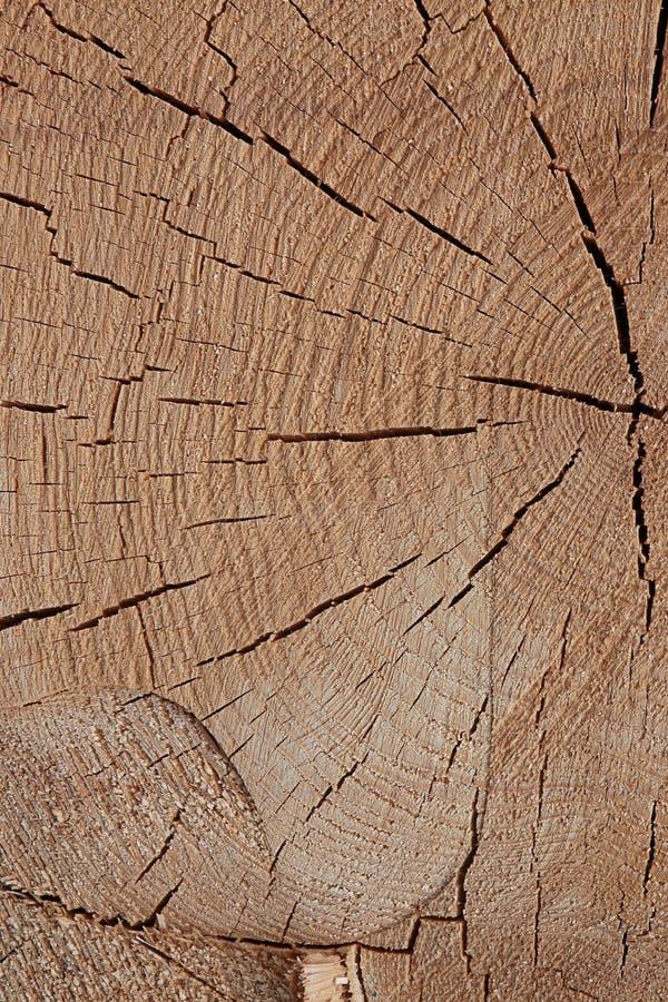 Piłujący drewna światła brązu powierzchni tekstury beżowych naturalnych wiele linii tła bazy nieociosany projekt suszył drewno zdjęcia stock