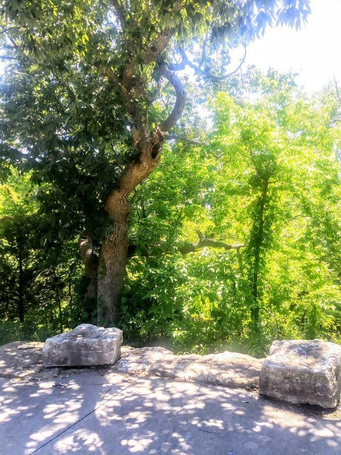 pi?kna natury osobliwo?? zakorzenia drzewa zdjęcie royalty free