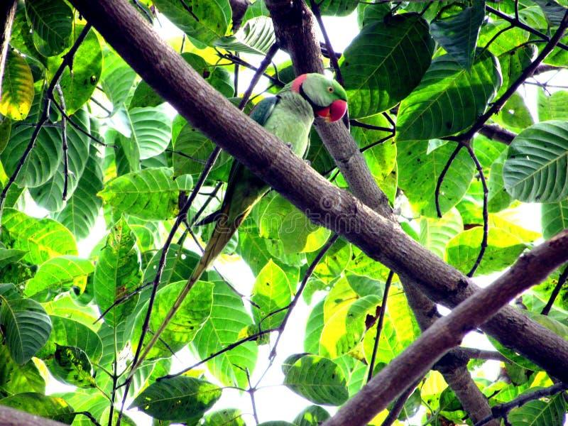 Pi?kna papuga na drzewie fotografia stock