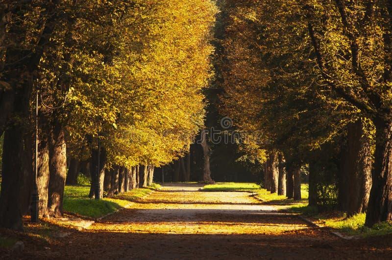 Pi?kna romantyczna aleja w parku z kolorowymi drzewami i ?wiat?em s?onecznym Jesieni naturalny t?o fotografia stock