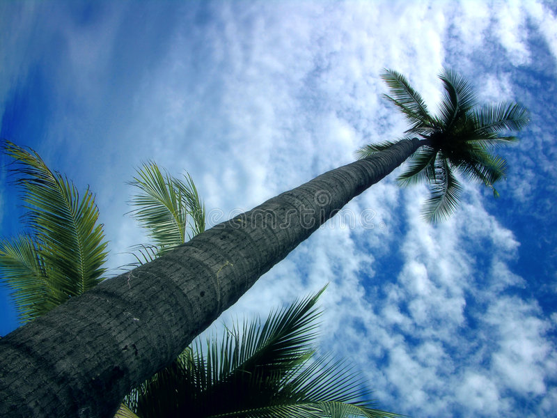 Download Piękne Niebieskie Niebo Drzewo Kontra Palm Obraz Stock - Obraz: 45471