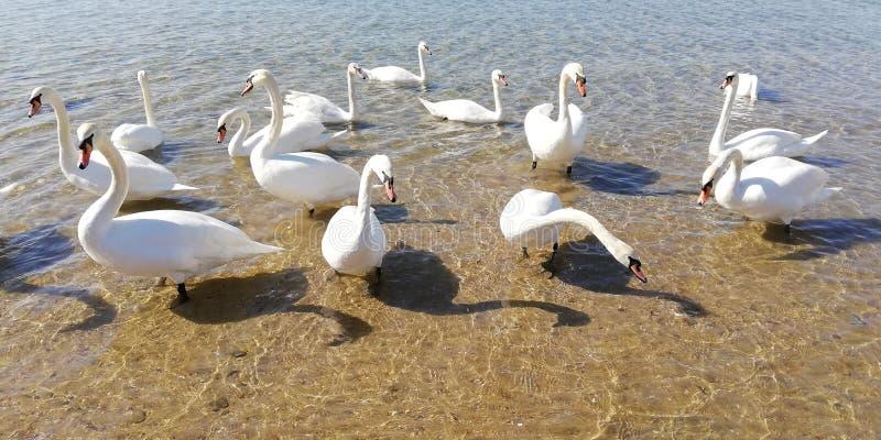 Pi?kni ?ab?d? i s?o?ca ?wiecenie na wodzie morskiej Dno morze przez fal na lato s?onecznym dniu T?o obrazy royalty free