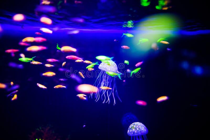 Pi?kni jellyfish, meduza w neonowym ?wietle z ryba Akwarium z b??kitnymi udzia?ami ryba i jellyfish Robi? akwarium zdjęcie stock