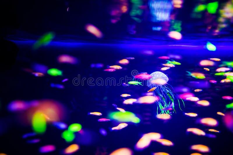 Pi?kni jellyfish, meduza w neonowym ?wietle z ryba Akwarium z b??kitnymi udzia?ami ryba i jellyfish Robi? akwarium obraz royalty free