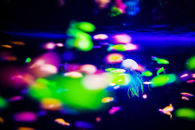 Pi?kni jellyfish, meduza w neonowym ?wietle z ryba Akwarium z b??kitnymi udzia?ami ryba i jellyfish Robi? akwarium fotografia royalty free