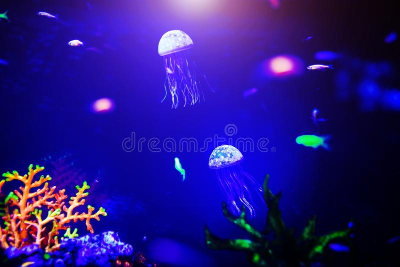 Pi?kni jellyfish, meduza w neonowym ?wietle z ryba Akwarium z b??kitnymi udzia?ami ryba i jellyfish Robi? akwarium zdjęcia stock