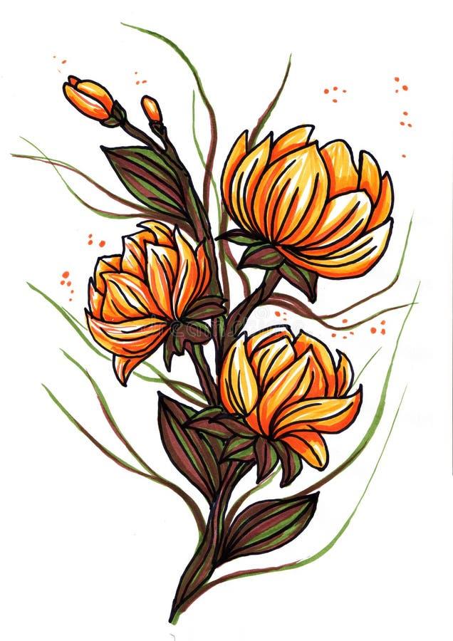 Pi?kni pomara?czowi leluja kwiaty odizolowywaj?cy na bia?ym tle royalty ilustracja