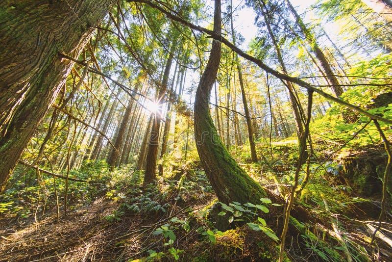 Pi?kni sceniczni g??biki Vancouver i Fraser dolina zdjęcie stock