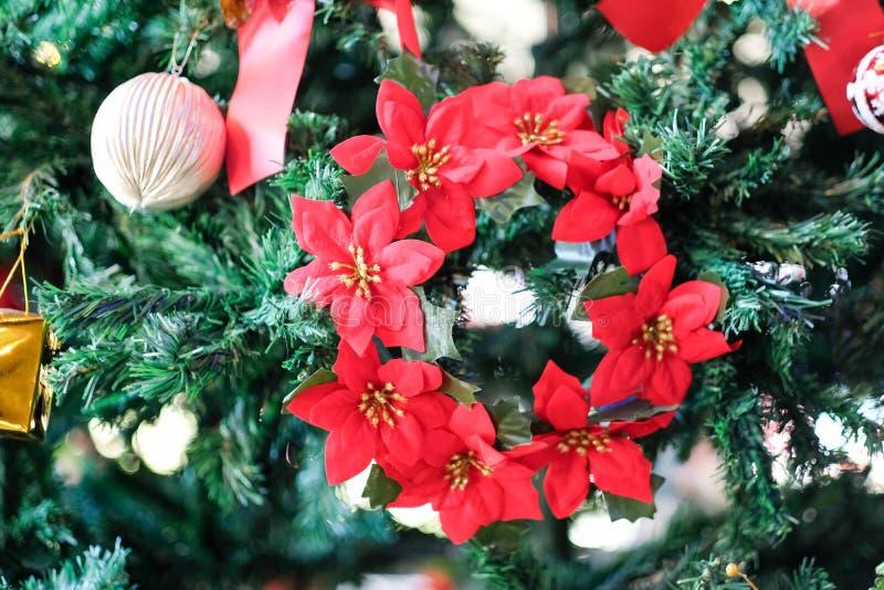 Pi?kny czerwony poinsecji euforbii pulcherrima, bo?e narodzenie gwiazdy kwiat obrazy stock