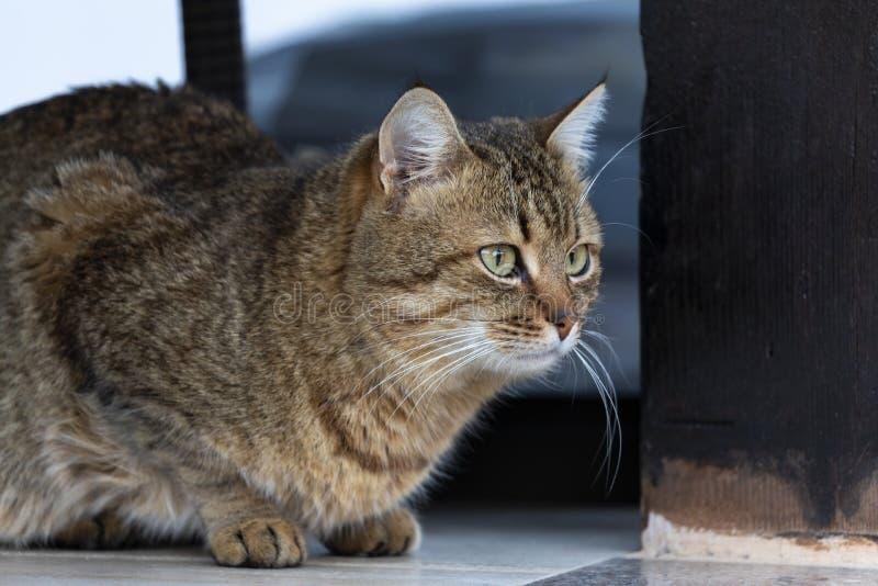 Pi?kny koci kot w domu zdjęcie royalty free