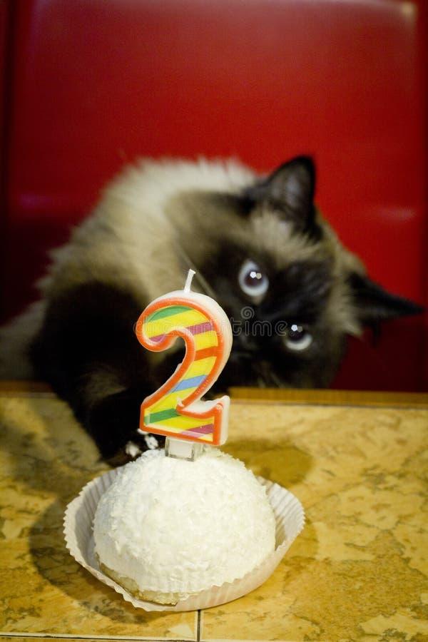 Pi?kny kot z niebieskimi oczami i urodzinowym tortem zdjęcia stock