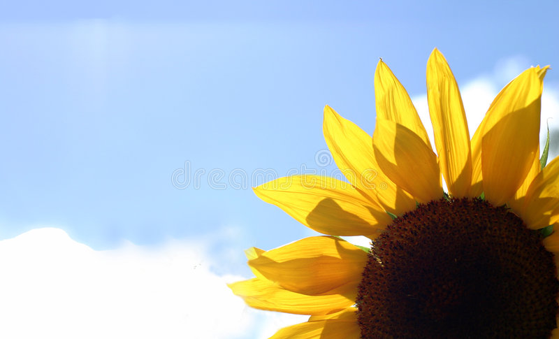 Piękny Kwiat Bright Zdjęcia Stock