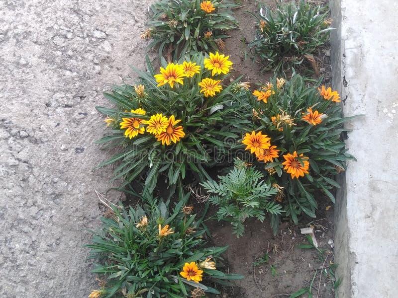 pi?kny kwiat fotografia stock