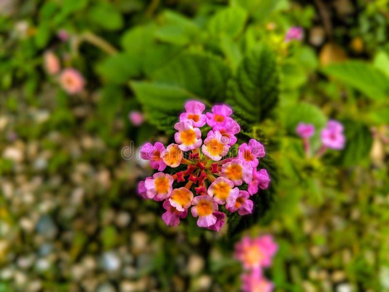 pi?kny kwiat obrazy stock