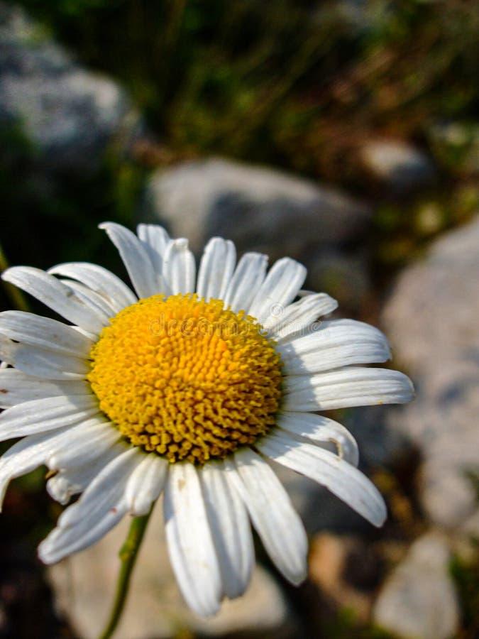 Pi?kny kwiat w lesie zdjęcia royalty free