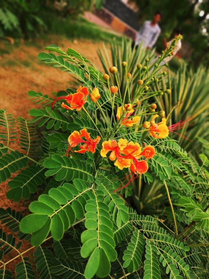 Pi?kny kwiatu pics fotografia royalty free