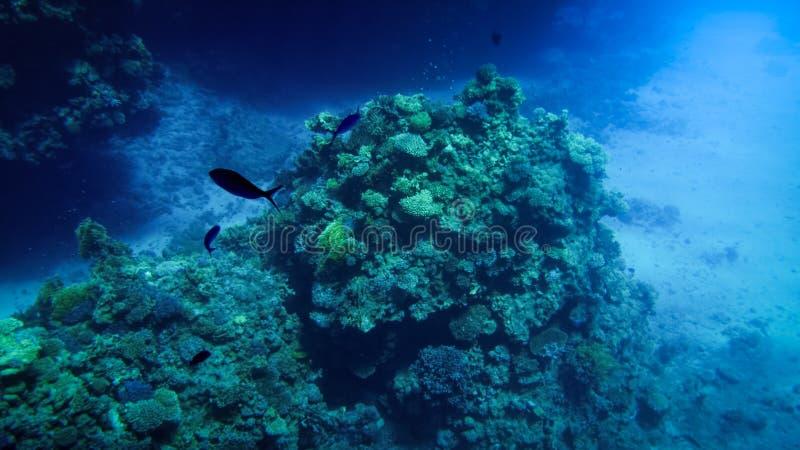 Pi?kny podwodny seascape kolorowa rafa koralowa i udzia?y tropikalne ryby p?ywa woko?o fotografia royalty free