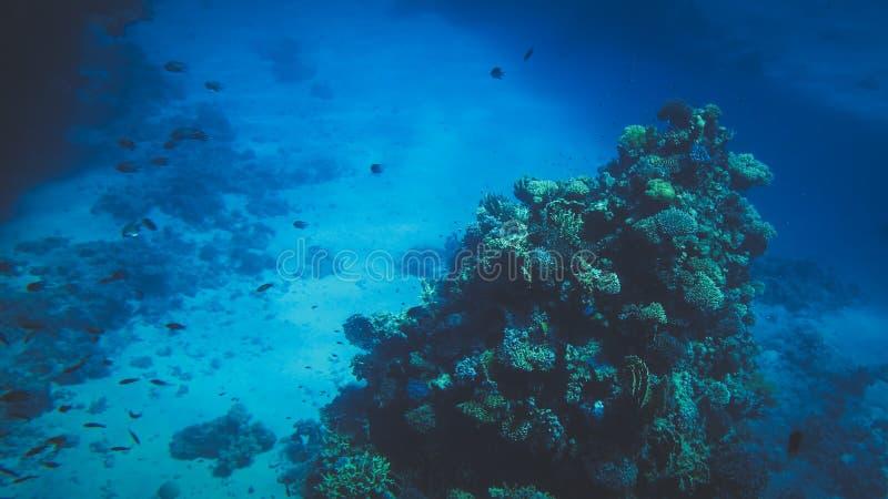 Pi?kny podwodny seascape kolorowa rafa koralowa i udzia?y tropikalne ryby p?ywa woko?o zdjęcia royalty free