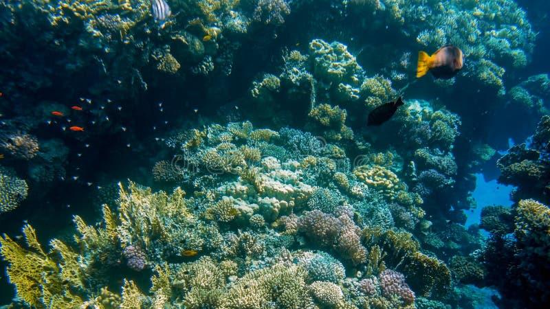 Pi?kny podwodny seascape kolorowa rafa koralowa i udzia?y tropikalne ryby p?ywa woko?o obrazy royalty free