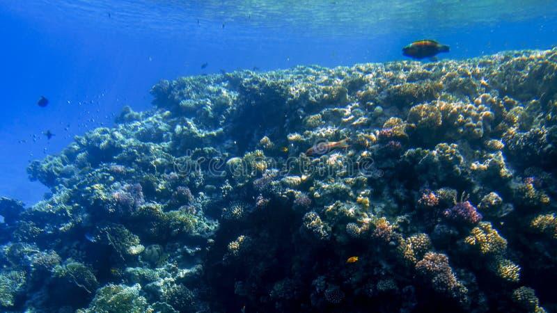 Pi?kny podwodny seascape kolorowa rafa koralowa i udzia?y tropikalne ryby p?ywa woko?o zdjęcia stock