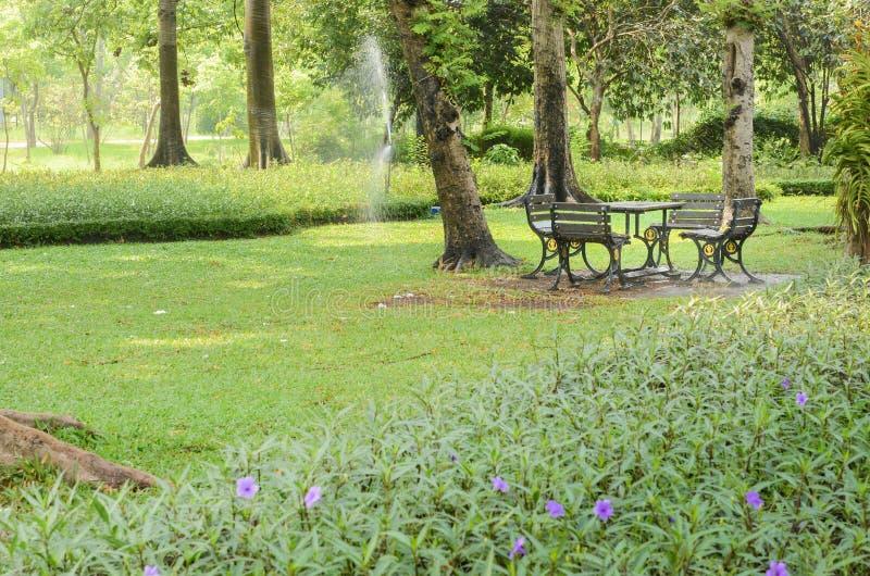 Pi?kny ranku ?wiat?a park publicznie zdjęcia royalty free