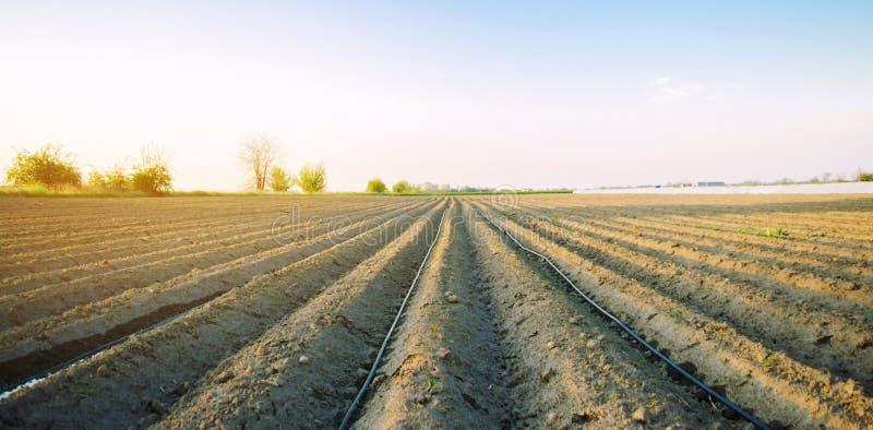 Pi?kny widok zaorany pole na s?onecznym dniu Przygotowanie dla zasadza? warzywa Rolnictwo p?l uprawnych r fotografia royalty free