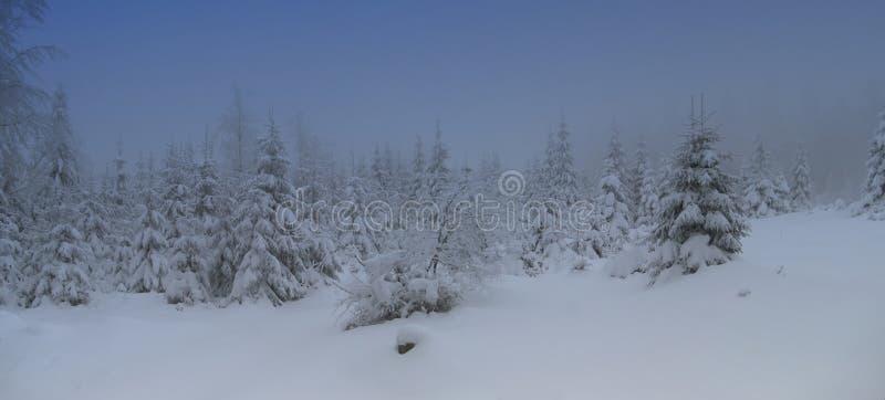 Pi?kny zima krajobraz z ?wie?ym ?niegiem zakrywa? ?wierkowych drzewa zdjęcia royalty free