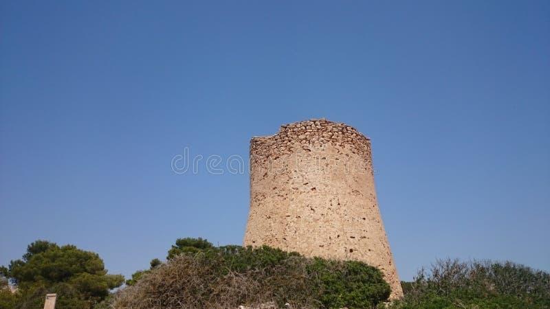 Pi Mallorca de Cala da torre foto de stock