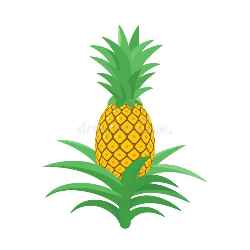 Pi?a Planta tropical con una fruta comestible Comosus de la pi?a Ilustraci?n aislada del vector libre illustration