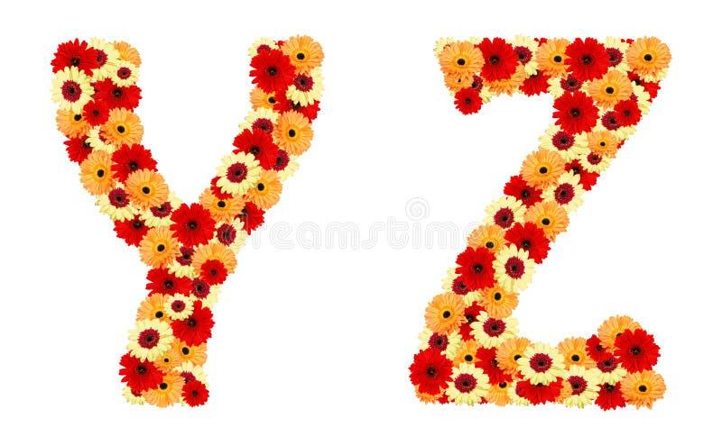 Pia batismal da flor da cor das flores do gerber isoladas fotos de stock royalty free
