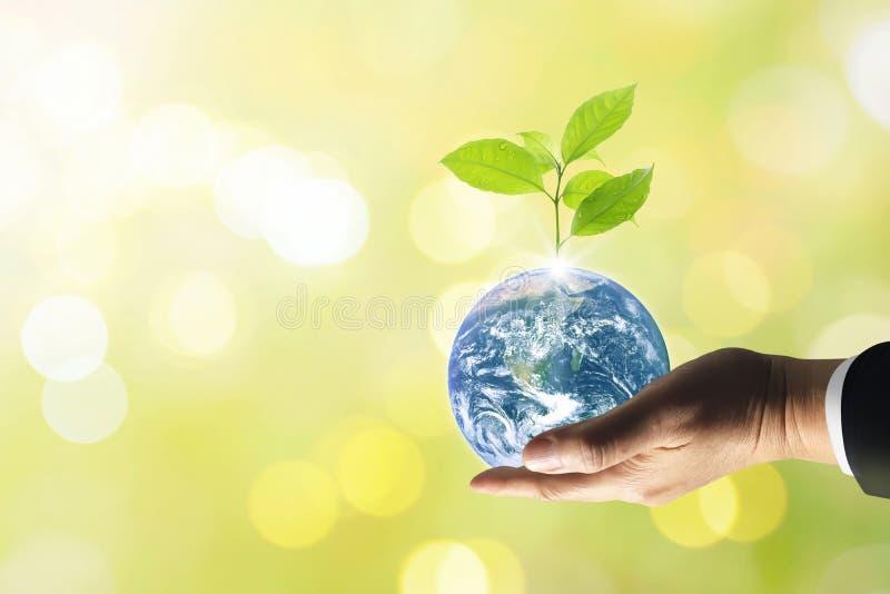 Pianeta Terra con il bello albero di crescita di freschezza immagine stock libera da diritti