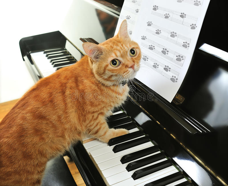 The pianist. A yellow cute cat playing the piano stock image