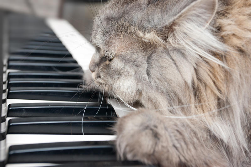 Pianista do gato imagem de stock royalty free