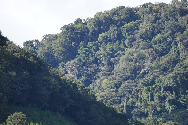 Pianiste River Valley près de la ville du bouquet au Panama images stock
