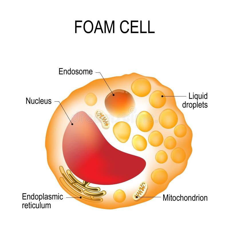 Piankowa komórka Komórki struktura ilustracja wektor