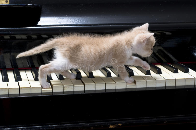 Download Piano cat stock image. Image of music, little, keys, small - 9744175