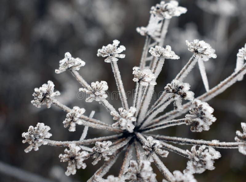 Piano congelato nell'inverno Valladolid fotografie stock