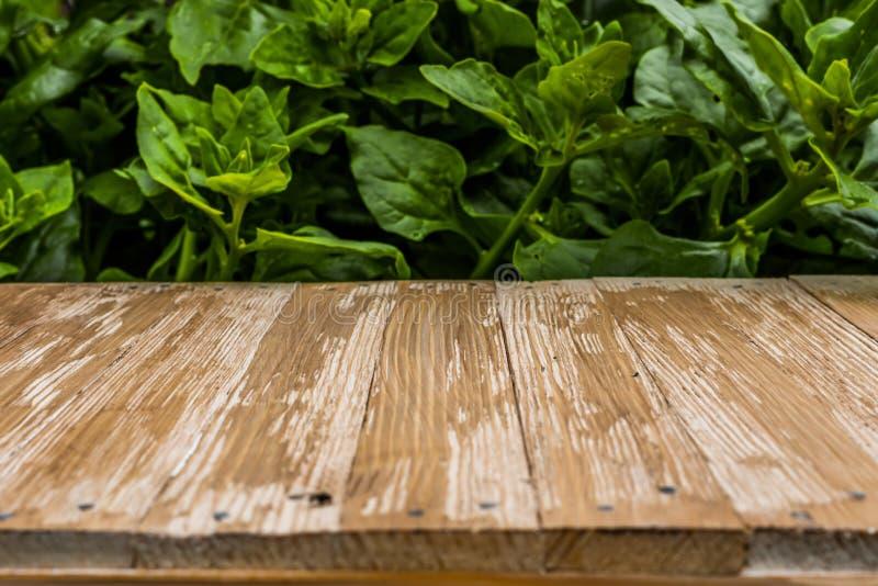 Piano d'appoggio di legno rustico vuoto su spinaci vaghi nel BAC del giardino fotografia stock
