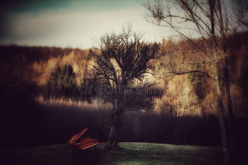 Piano onder de boom stock foto