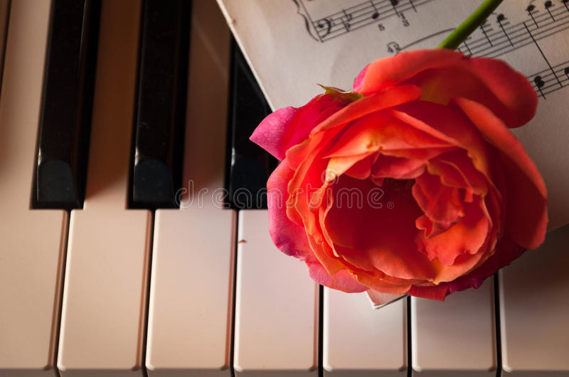 Piano with rose royalty free stock images