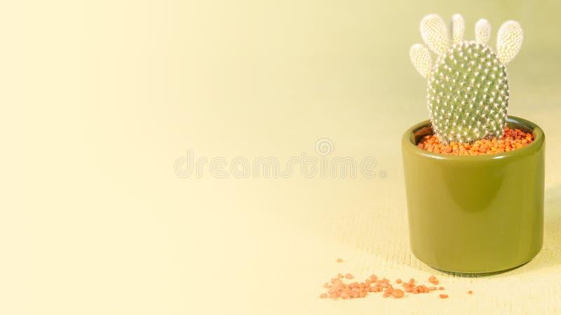 Piano splendido con il cactus delle dita in vaso con le pietre rosse al gree fotografia stock