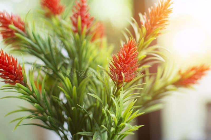 Pianta artificiale del fiore di plastica del primo piano con la perdita leggera fotografia stock libera da diritti